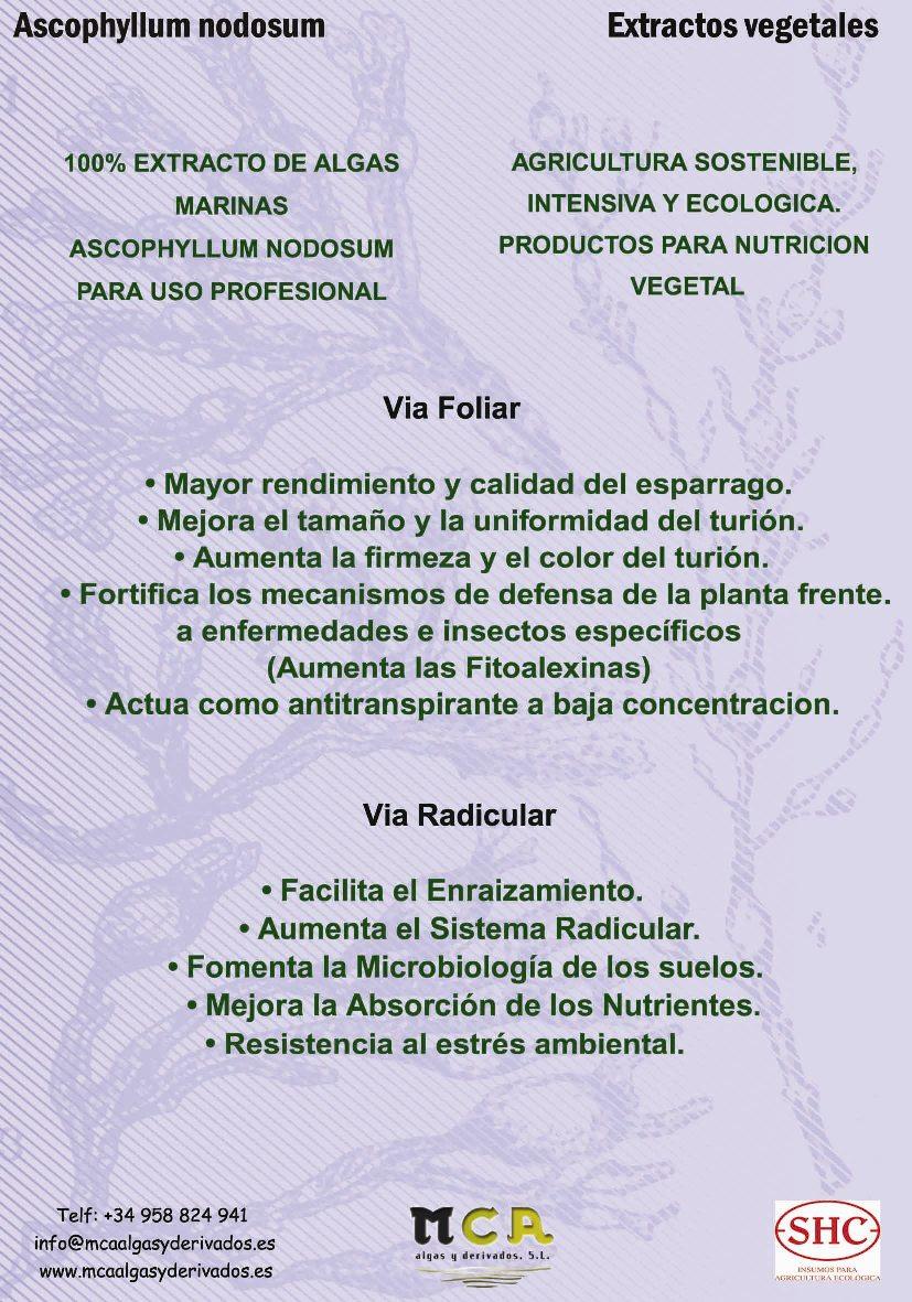 publicidad-español-2010-2-copier